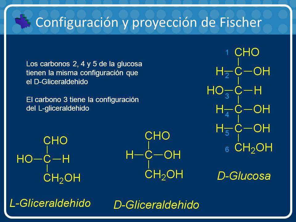 Configuración y proyección de Fischer