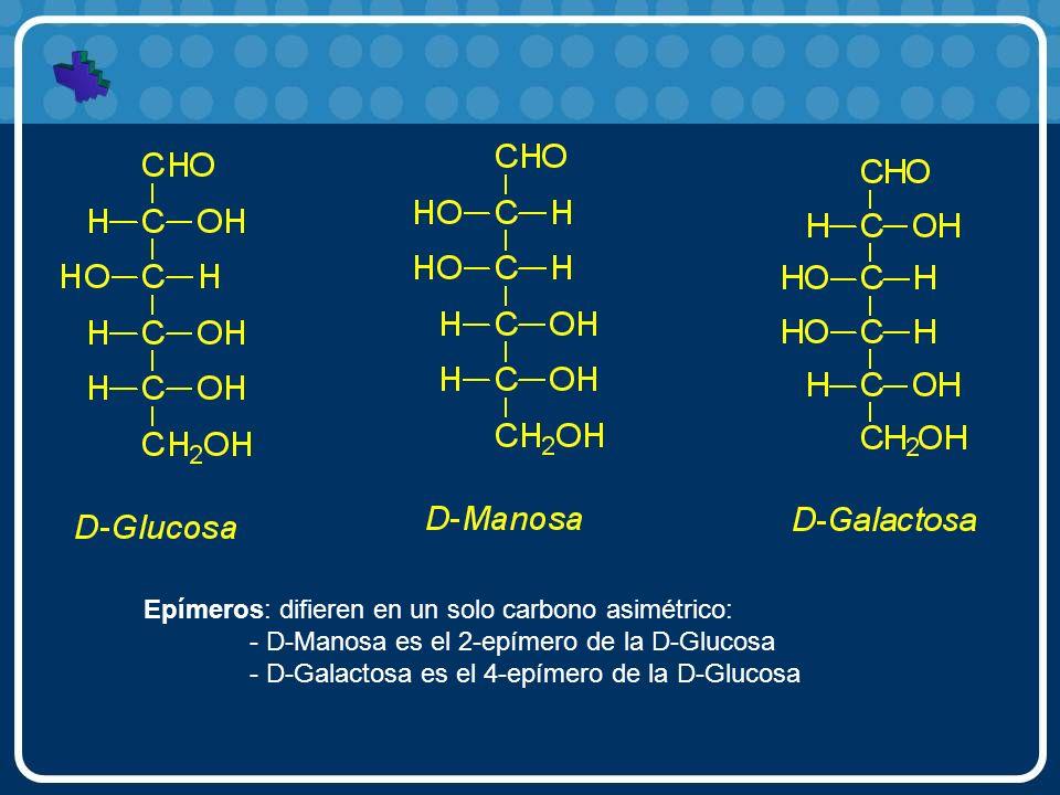 Epímeros: difieren en un solo carbono asimétrico: