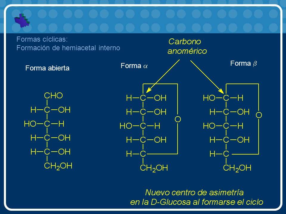 Formas cíclicas: Formación de hemiacetal interno Forma b Forma a Forma abierta