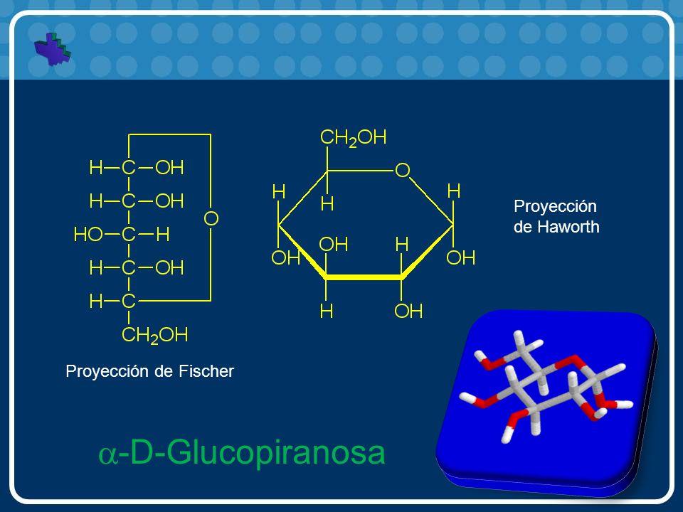 Proyección de Haworth Proyección de Fischer a-D-Glucopiranosa