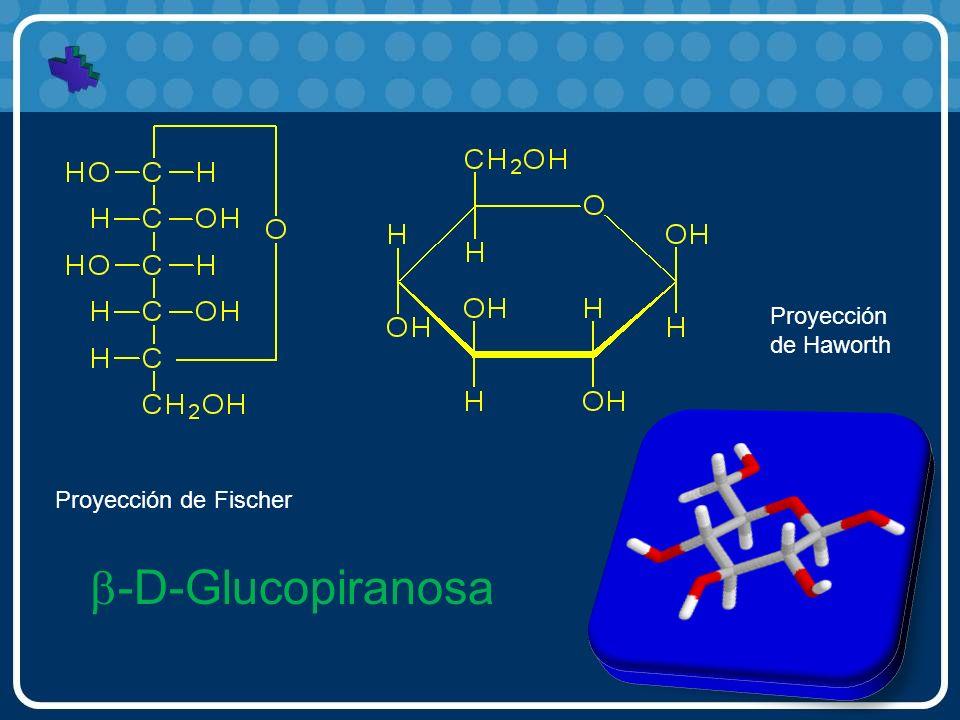 Proyección de Haworth Proyección de Fischer b-D-Glucopiranosa