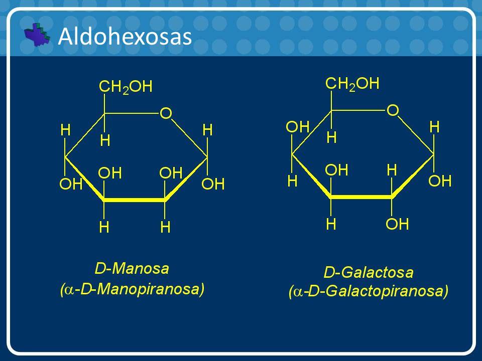 Aldohexosas