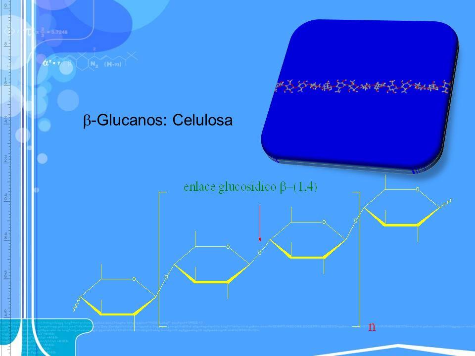 b-Glucanos: Celulosa