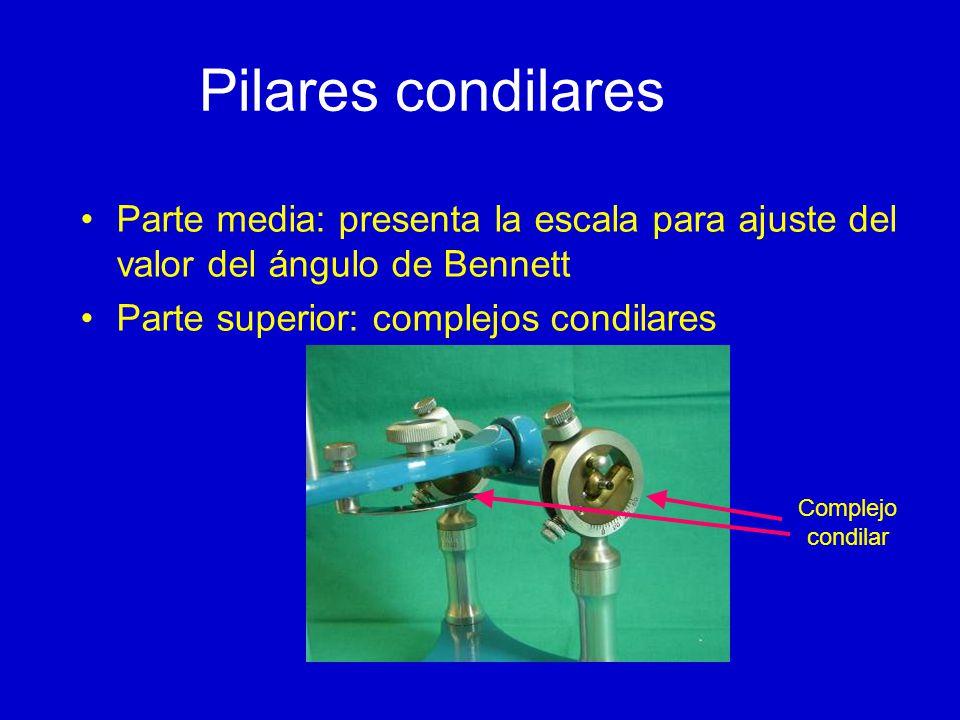 Pilares condilares Parte media: presenta la escala para ajuste del valor del ángulo de Bennett. Parte superior: complejos condilares.