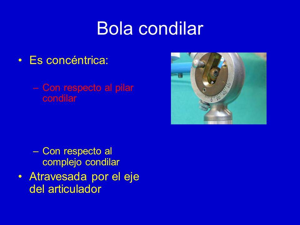 Bola condilar Es concéntrica: Atravesada por el eje del articulador