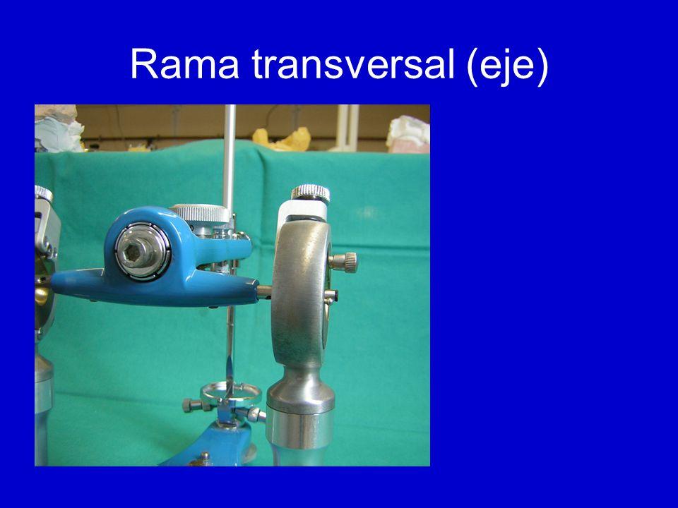 Rama transversal (eje)