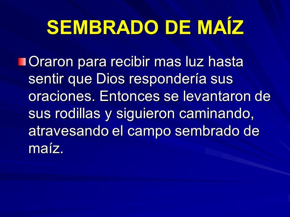 SEMBRADO DE MAÍZ