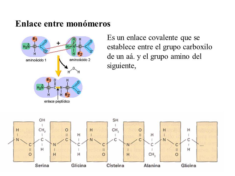 Enlace entre monómeros