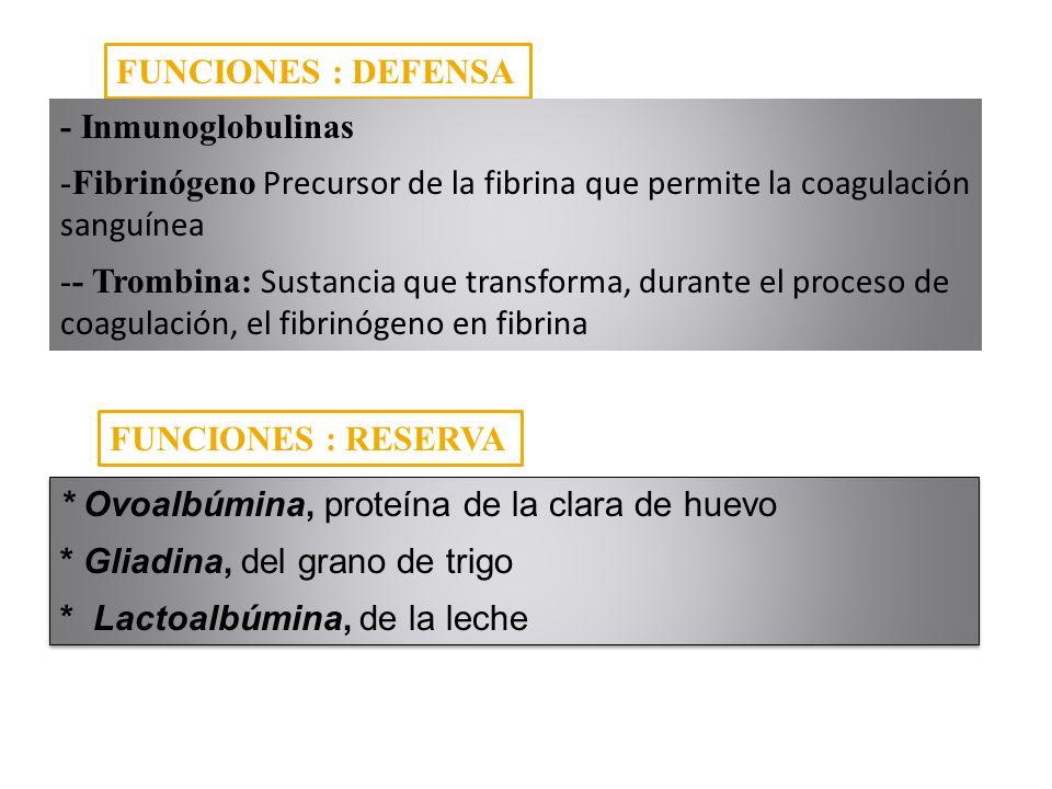 FUNCIONES : DEFENSA - Inmunoglobulinas. Fibrinógeno Precursor de la fibrina que permite la coagulación sanguínea.