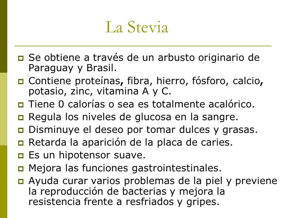 La Stevia Se obtiene a través de un arbusto originario de Paraguay y Brasil.