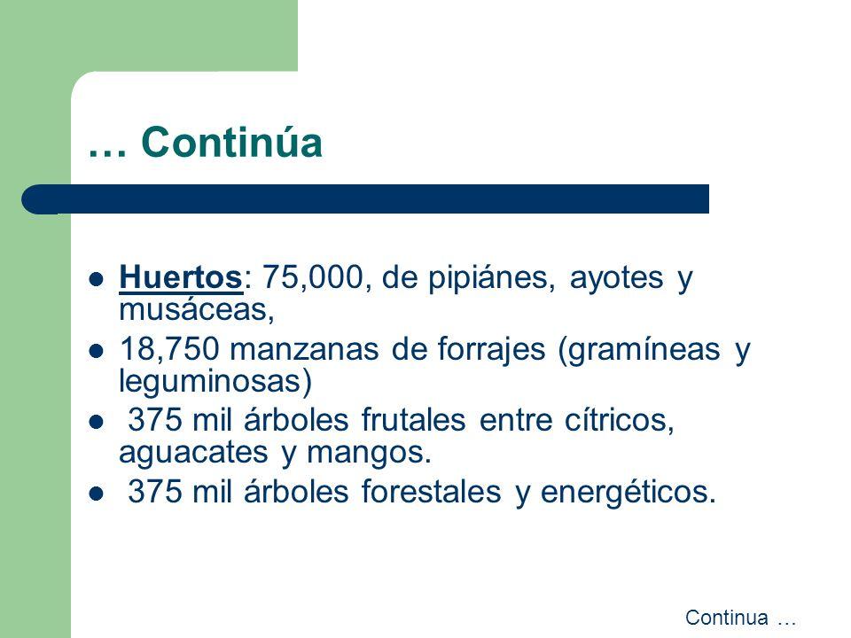 … Continúa Huertos: 75,000, de pipiánes, ayotes y musáceas,