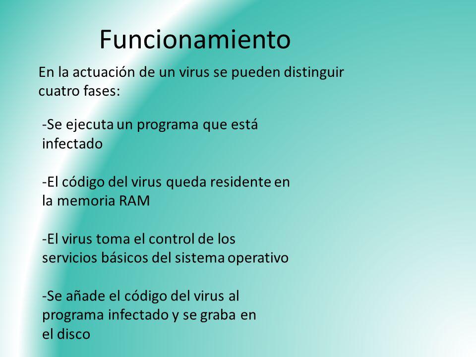 Funcionamiento En la actuación de un virus se pueden distinguir cuatro fases: -Se ejecuta un programa que está infectado.