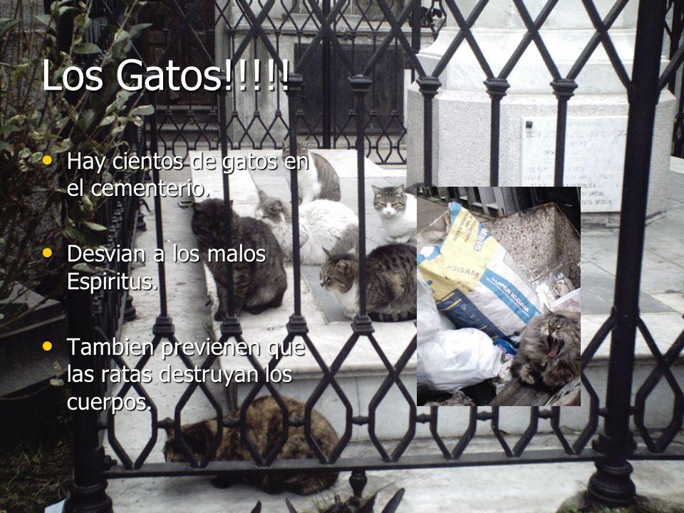 Los Gatos!!!!! Hay cientos de gatos en el cementerio.