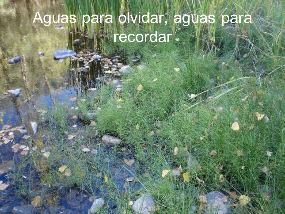 Aguas para olvidar, aguas para recordar