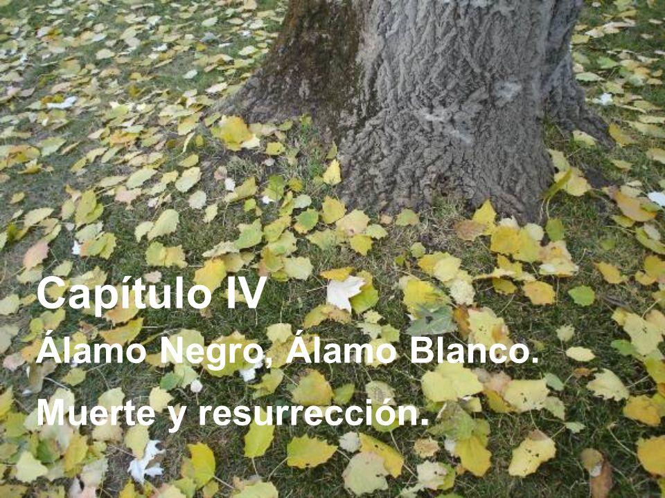 Capítulo IV Álamo Negro, Álamo Blanco. Muerte y resurrección.