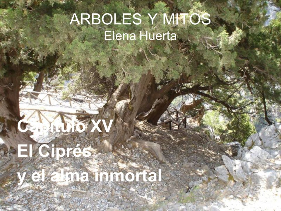 ARBOLES Y MITOS Elena Huerta
