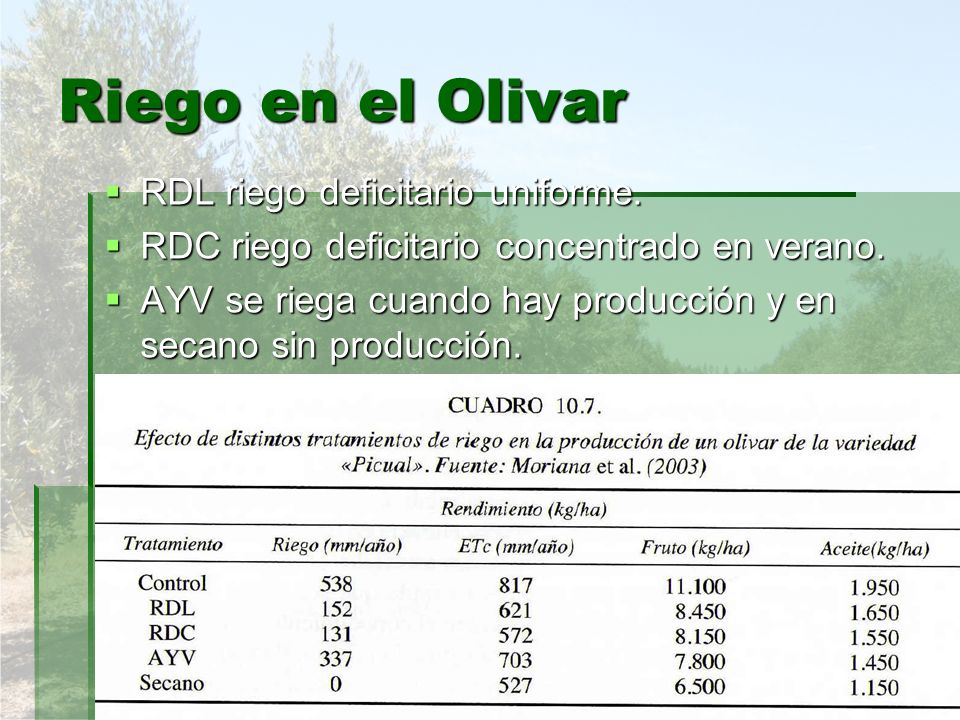 Riego en el Olivar RDL riego deficitario uniforme.