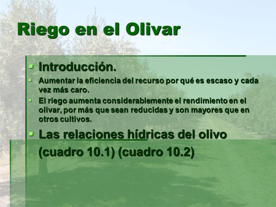 Riego en el Olivar Introducción. Las relaciones hídricas del olivo