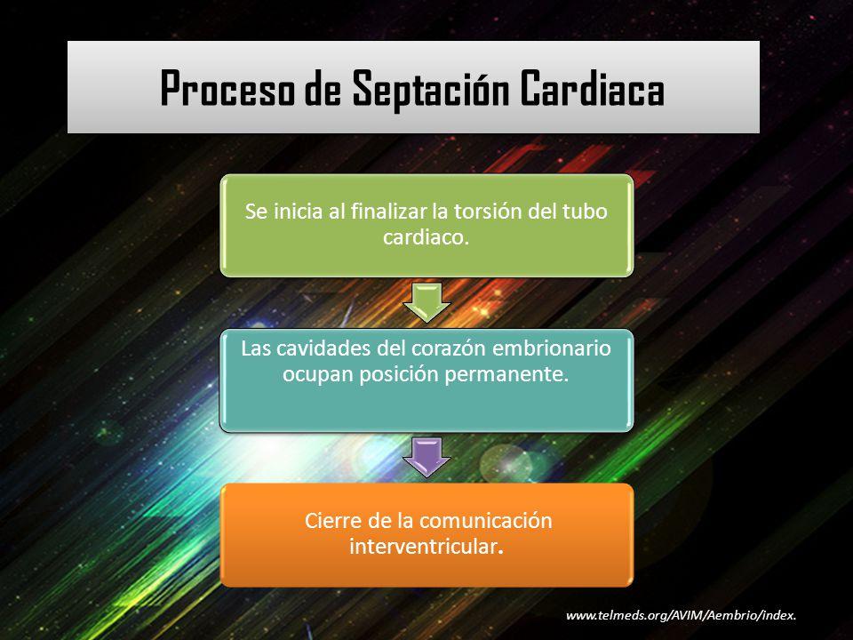 Proceso de Septación Cardiaca