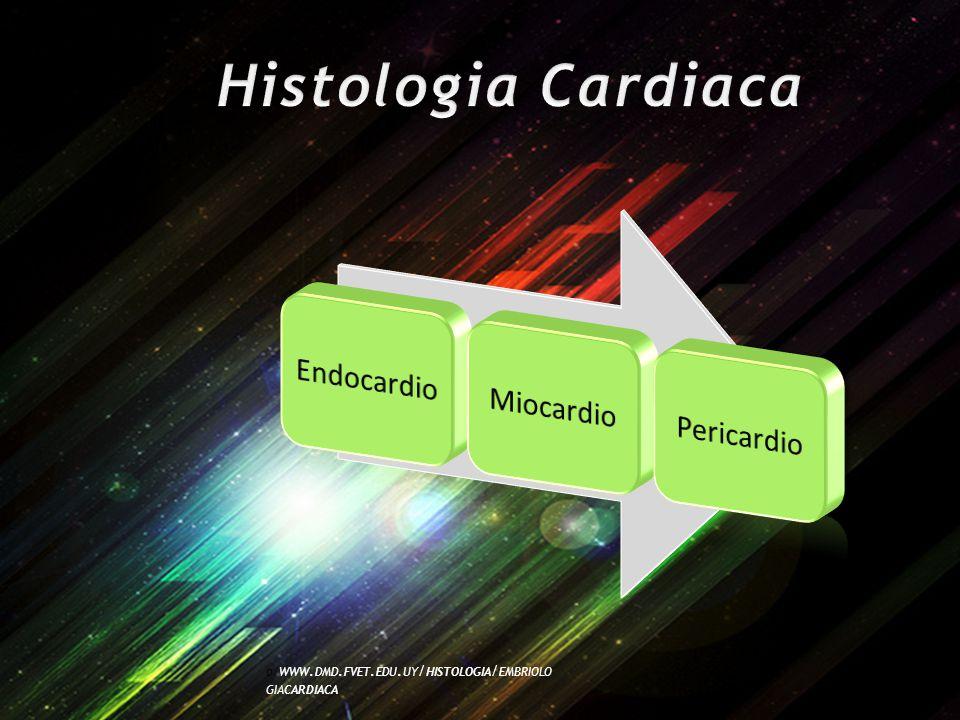 Histologia Cardiaca Endocardio. Miocardio. Pericardio.