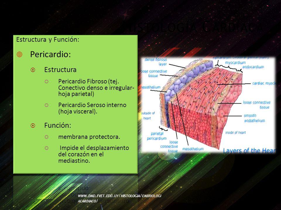 Histología Cardíaca Pericardio: Estructura Función: