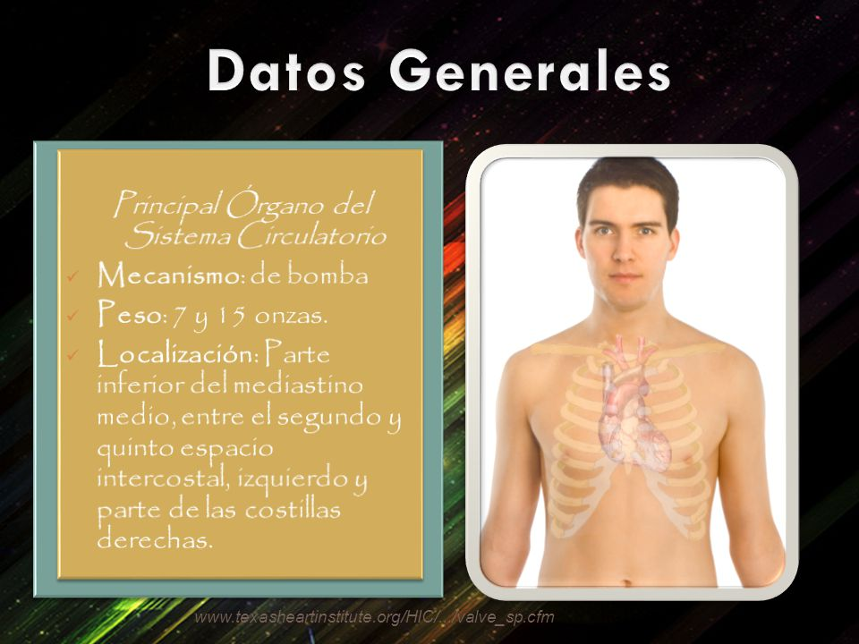 Principal Órgano del Sistema Circulatorio