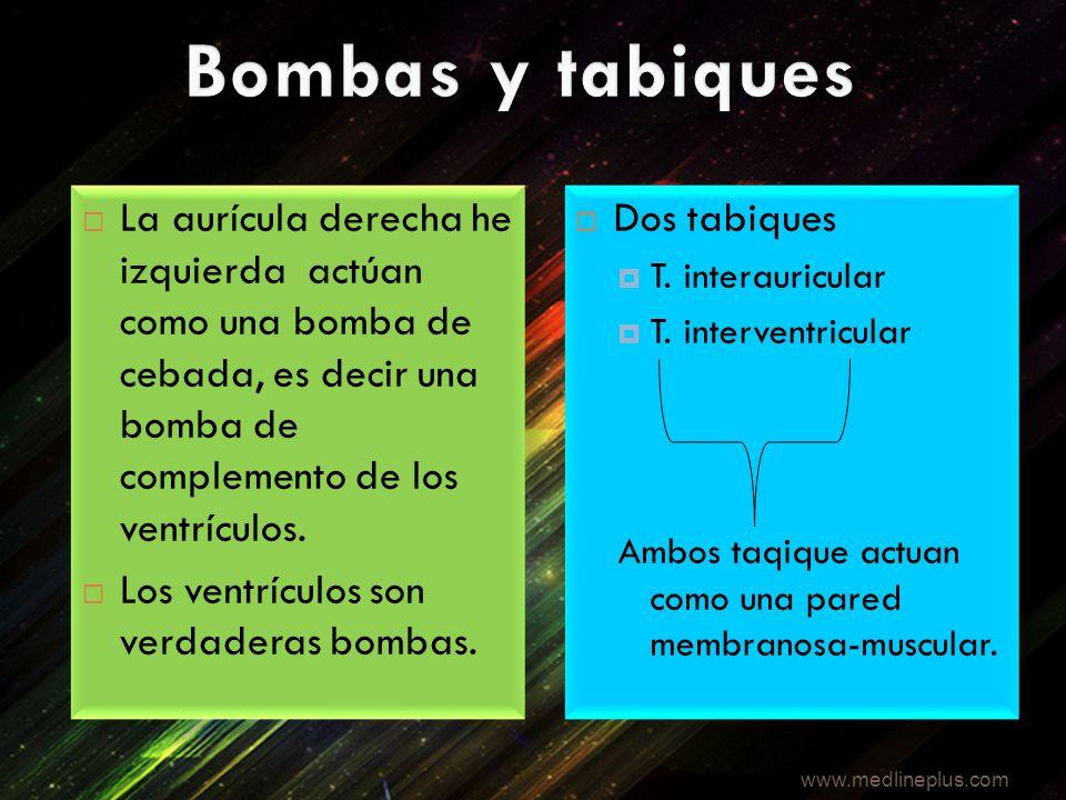 Bombas y tabiques La aurícula derecha he izquierda actúan como una bomba de cebada, es decir una bomba de complemento de los ventrículos.