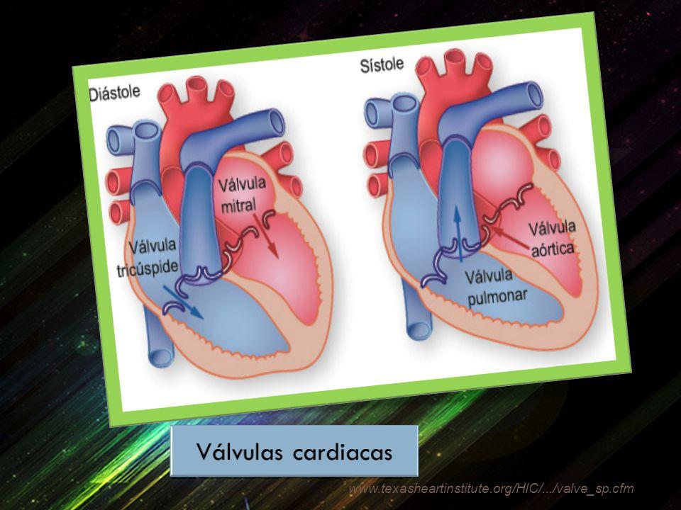 Válvulas cardiacas www.texasheartinstitute.org/HIC/.../valve_sp.cfm