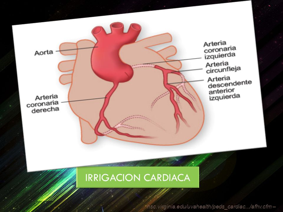 IRRIGACION CARDIACA hsc.virginia.edu/uvahealth/peds_cardiac.../afhv.cfm –