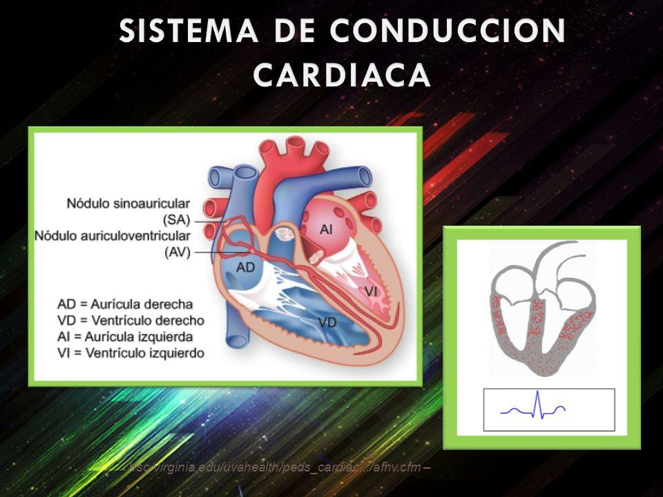 SISTEMA DE CONDUCCION CARDIACA