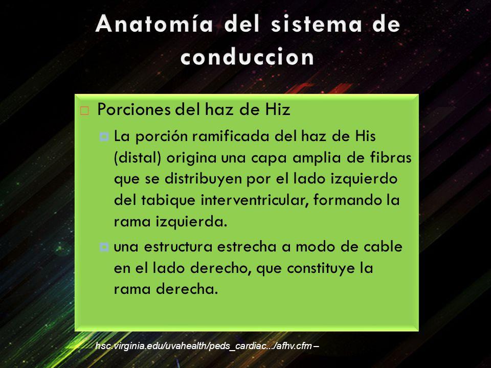 Anatomía del sistema de conduccion