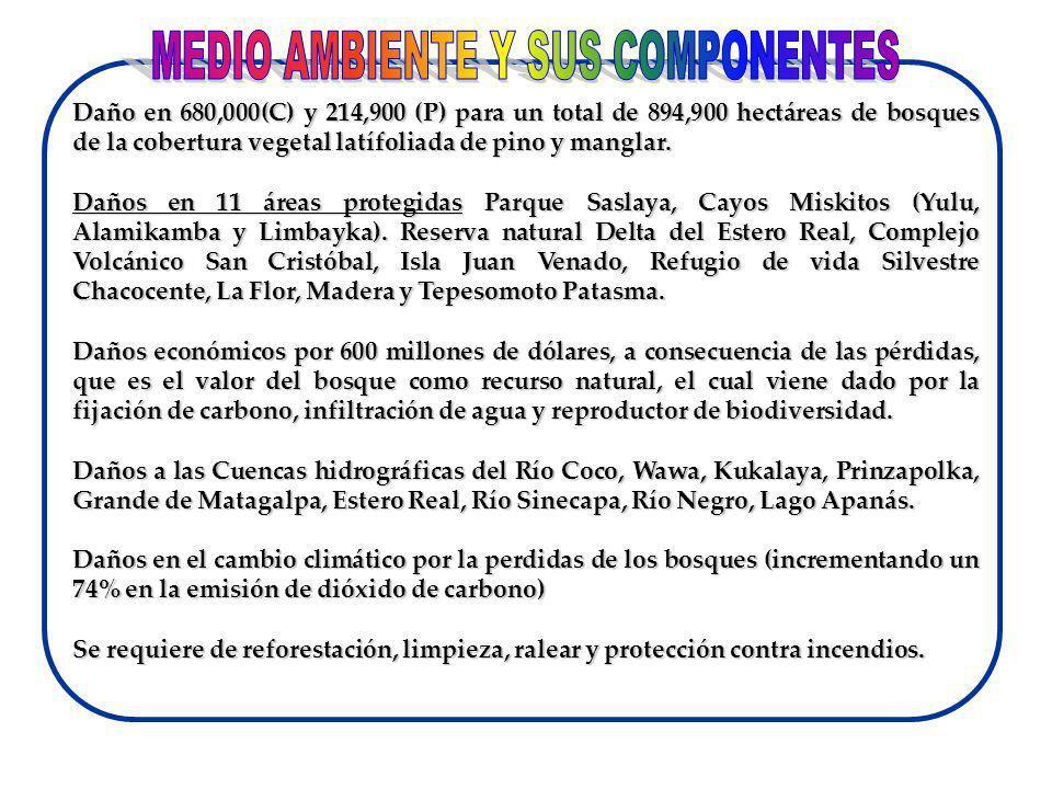 MEDIO AMBIENTE Y SUS COMPONENTES