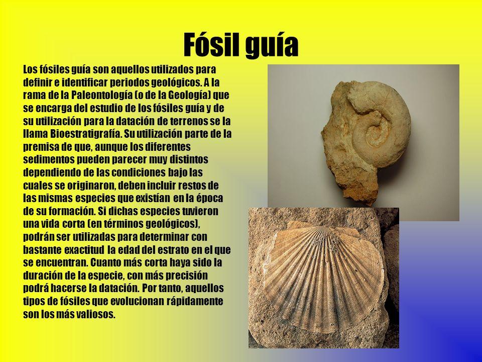 Fósil guía