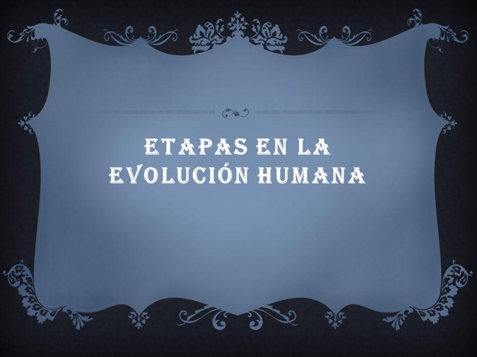 Etapas en la evolución humana