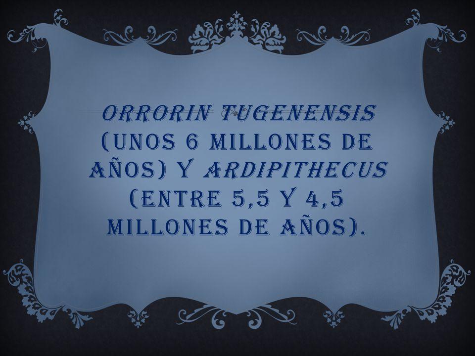 Orrorin tugenensis (unos 6 millones de años) y Ardipithecus (entre 5,5 y 4,5 millones de años).