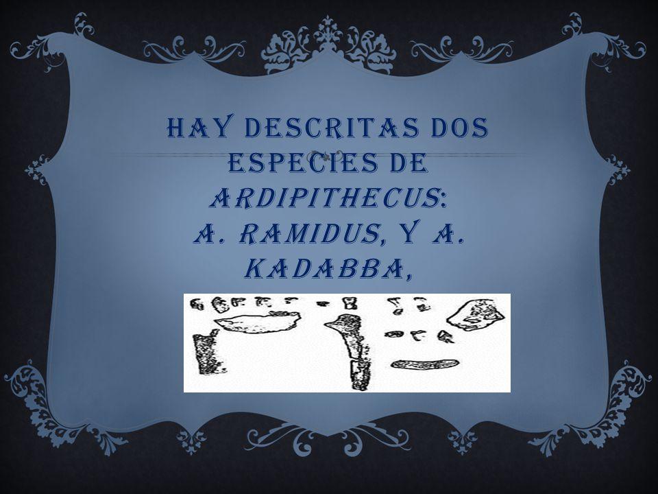 hay descritas dos especies de Ardipithecus: A. ramidus, y A. kadabba,
