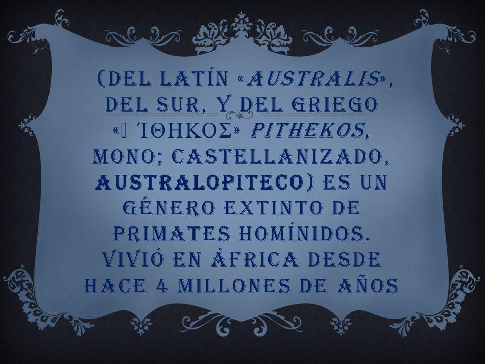(del latín «australis», del sur, y del griego «πίθηκος» pithekos, mono; castellanizado, australopiteco) es un género extinto de primates homínidos.