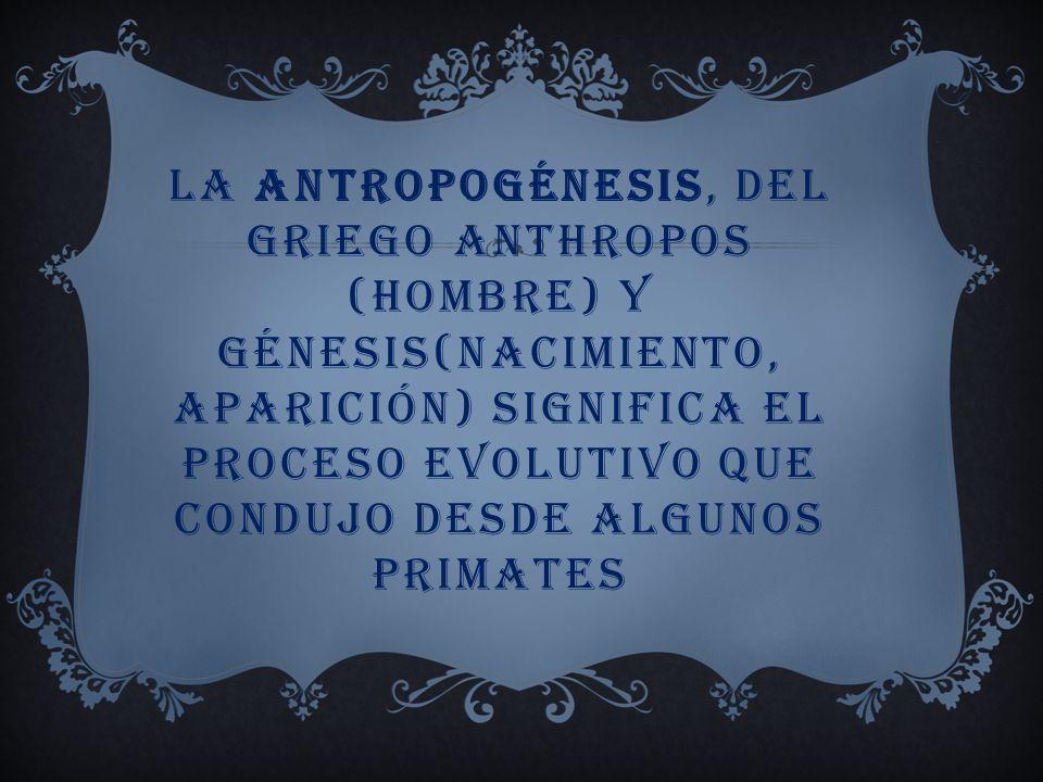 La antropogénesis, del griego anthropos (Hombre) y génesis(nacimiento, aparición) significa el proceso evolutivo que condujo desde algunos primates