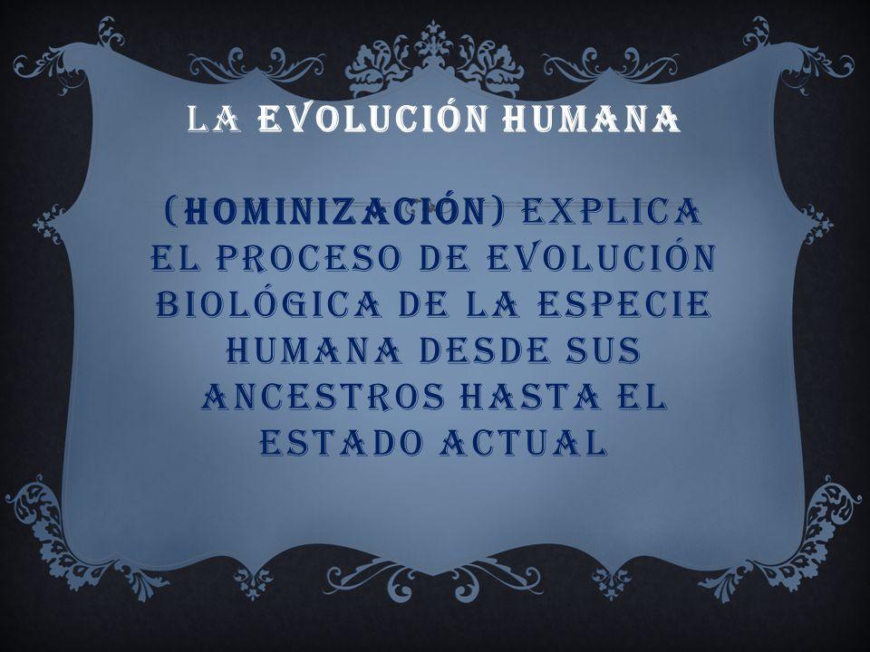 La evolución humana (hominización) explica el proceso de evolución biológica de la especie humana desde sus ancestros hasta el estado actual