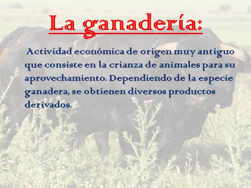 La ganadería: