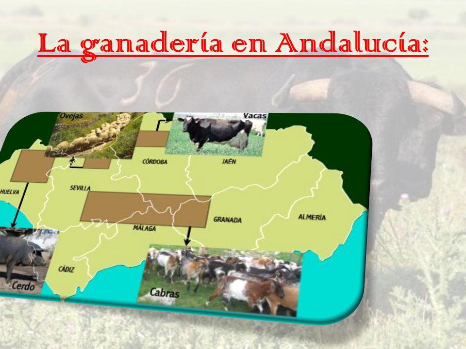 La ganadería en Andalucía: