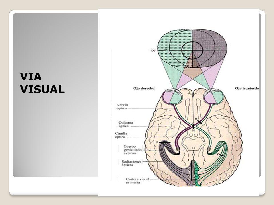 Contemporáneo Anatomía Paul Grilley Para El Yoga Componente ...