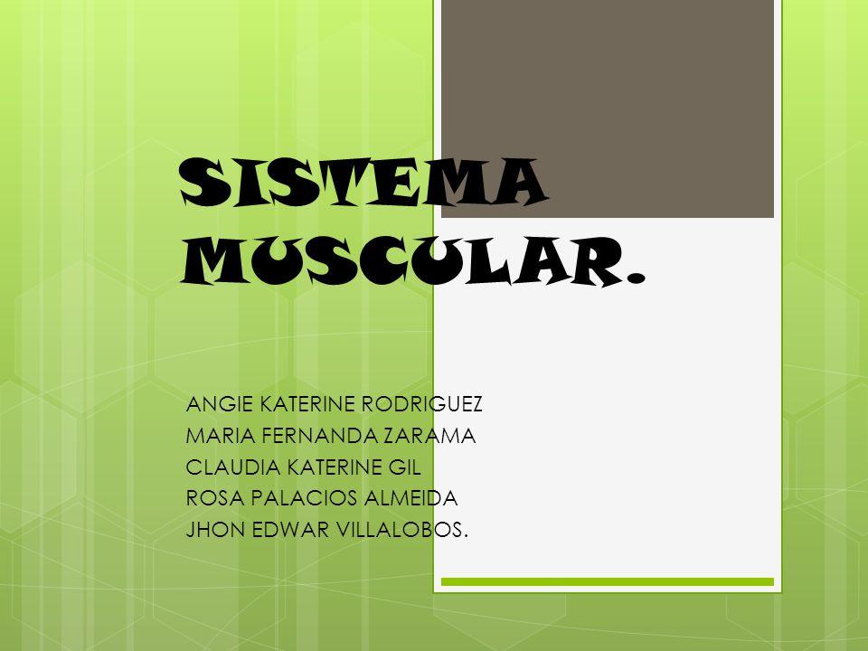 SISTEMA MUSCULAR. ANGIE KATERINE RODRIGUEZ MARIA FERNANDA ZARAMA