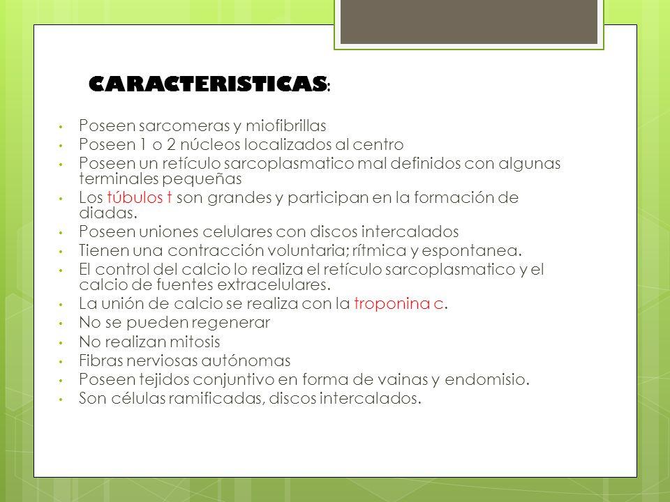 CARACTERISTICAS: Poseen sarcomeras y miofibrillas