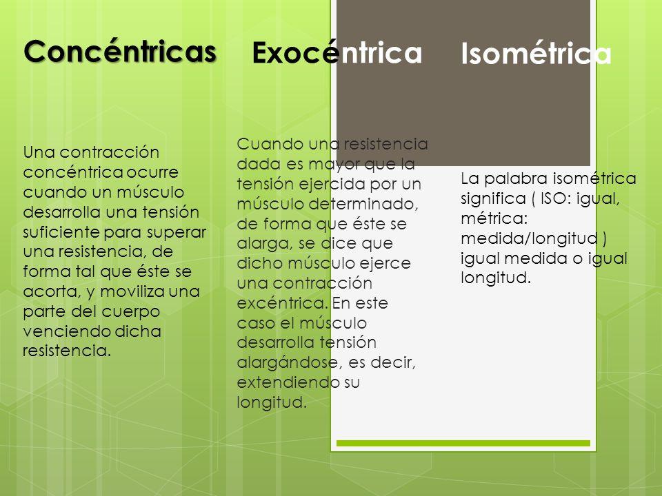 Concéntricas Exocéntrica Isométrica