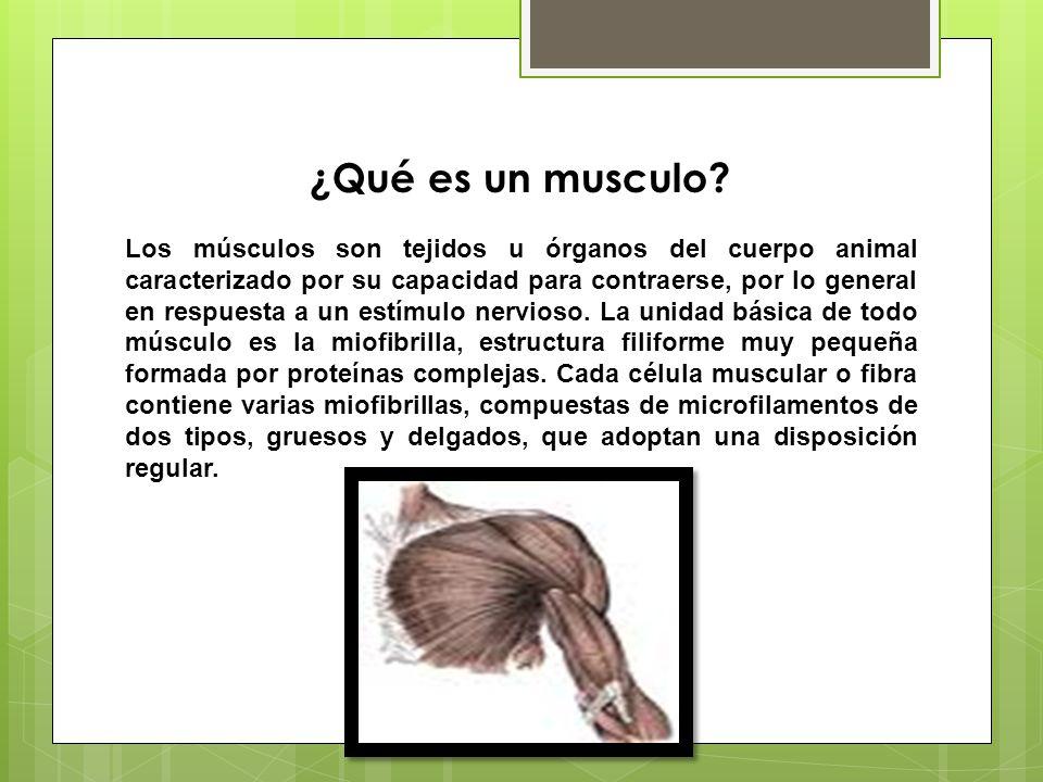 Que es un musculo for Que es un vivero frutal