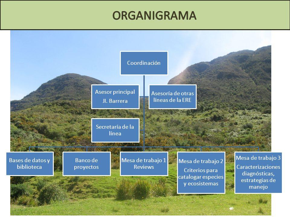 ORGANIGRAMA Coordinación Bases de datos y biblioteca