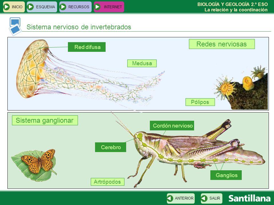 Sistema nervioso de invertebrados