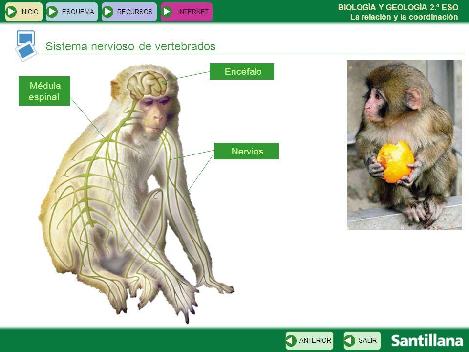Sistema nervioso de vertebrados