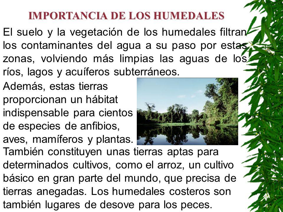IMPORTANCIA DE LOS HUMEDALES